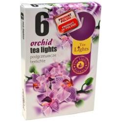 Illatos teamécsesek (6db) - Orchidea