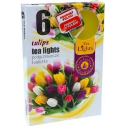 Illatos teamécsesek (6db) - Tulipán